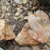 Geoda Montseny - 30 abril 2014 025.jpg (Author: Joan Martinez Bruguera)