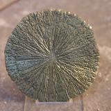 Pirita<br />Sparta, Condado Randolph, Illinois, USA<br />63 mm. de diámetro aprox. - 6 mm.<br /> (Autor: Pedro Naranjo)
