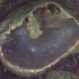 Calcita y Clinoptilolita-Ca<br />Barranco de Tocodoman, La Aldea de San Nicolás, Gran Canaria, Provincia de Las Palmas, Canarias, España<br />7 cm. (detalle)<br /> (Autor: Jose Bello)