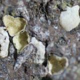 Clinoptilolita<br />Barranco de Tocodoman, La Aldea de San Nicolás, Gran Canaria, Provincia de Las Palmas, Canarias, España<br />5 x 5 cm. (detalle)<br /> (Autor: Jose Bello)