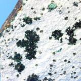 Atacamite<br />La Farola Mine, Cerro Pintado, Las Pintadas District, Tierra Amarilla, Copiapó Province, Atacama Region, Chile<br />20 x 18 x 4.0 cm<br /> (Author: Don Lum)