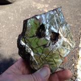 Phlogopite Amity Four inches (Author: Glenn Rhein)