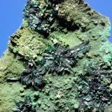 Atacamite<br />Copiapó Province, Atacama Region, Chile<br />9.5 x 6.7 cm<br /> (Author: Don Lum)
