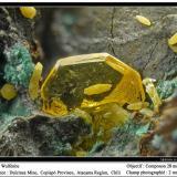 WulfeniteMina Dulcinea de Llampos, Cachiyuyo de Llampos, Provincia Copiapó, Región Atacama, Chilefov 3.5 mm (Author: ploum)