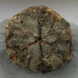 Cordierita (variedad Cerasita de Kikuchi)<br />Mina Yanahara, Misaki-cho, Prefectura Okayama, Región Chugoku, Isla Honshu, Japón<br />8 x 8 mm.<br /> (Autor: prcantos)