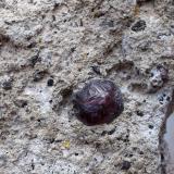Almandino (grupo granate)<br />Rambla de las Granatillas, El Hoyazo, Níjar, Comarca Metropolitana de Almería, Almería, Andalucía, España<br />6 x 3 cm (cristal de 5 mm)<br /> (Autor: Cristalino)