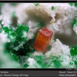 WulfeniteMina Musonoi, Kolwezi, Distrito Kolwezi, Cinturón de cobre de Katanga, Katanga (Shaba), Congo RD (Zaire)fov 1.8 mm (Author: ploum)