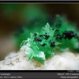 Annabergite<br />Km-3 Mine, Lavrion, Lavrion Mining District, Attikí (Attica) Prefecture, Greece<br />fov 3 mm<br /> (Author: ploum)