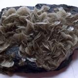 Barita<br />Mines Can Palomeres, Malgrat de Mar, Comarca Maresme, Barcelona, Catalunya, España<br />7 x 4 cm<br /> (Autor: Cristalino)
