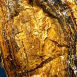Alofana<br />Sot de les Mines, Santa Creu d'Olorda, Barcelona ciutat, Serra de Collserola, Barcelonès, Barcelona, Catalunya, España<br />4,5 x 7,5 x 3 cm.<br /> (Autor: Felipe Abolafia)