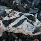 Calcite and amphibole<br />Příbram, Central Bohemia Region, Bohemia, Czech Republic<br />15 x 30 cm<br /> (Author: Psax)