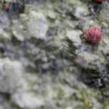 Annabergita cobaltífera<br />Pedrera Tamariu, Martorell, Comarca Baix Llobregat, Barcelona, Catalunya, España<br />5 x 4 x 3 cm<br /> (Autor: karbu8)