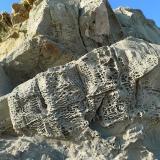 Margocaliza Punta Paloma, Tarifa, Cádiz, Andalucía, España. CdV: 6 m Edad: Oligoceno Mezcla de roca clástica (limos y arcillas) y química (caliza), con formas de erosión alveolar. (Autor: Josele)