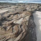 Toba sobre arena caliza La Isleta, Gran Canaria, España A pesar de su color claro, contrasta con la arena blanca formada por restos de concha triturados (Autor: María Jesús M.)