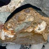 Conglomerado cementado por arenisca, con cantos rodados de rocas volcánicas variadas y lapas fósiles. La arena del cemento es una mezcla de arena volcánica y caliza. San Felipe, Gran Canaria. España Ancho de imagen 30 cm (Autor: María Jesús M.)