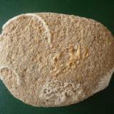 Arenisca caliza con fósiles La Graciosa. Islas Canarias. España. Ancho de imagen 13 cm. A pesar de que la roca es casi 100 por 100 caliza, se observan los puntitos negros de la arena volcánica. (Autor: María Jesús M.)