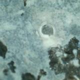 Suevita (detalle del mineral azul) Cráter de Nördlinger-Ries (Baviera, Alemania) 400X Las costras de mineral azul tienen esta textura microscópica finamente granulada.  Por comparación con otras fotografías, pienso que puede tratarse de la stishovita (un cuarzo tetragonal de alta presión y mayor grado de empaquetamiento en su estructura cristalina). (Autor: prcantos)
