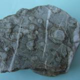 Cuarcita Sierra de la Mosca - Cáceres - Extremadura - España 9 x 7 x 9 cm. Cuarcita con icnofósiles skolithos. (Autor: Antonio GG)