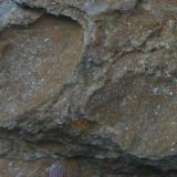 Arenisca Sierra de la Mosca - Cáceres - Extremadura - España Detalle aumentado. Arenisca limonitizada con fósiles. (Autor: Antonio GG)