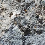 Este gneiss aparece como xenolito enclavado entre dacitas calcoalcalino-potásicas, como puede verse en el centro de la foto. El Hoyazo de Níjar, Almería, Andalucía, España FOV: 20 cm (Autor: Josele)