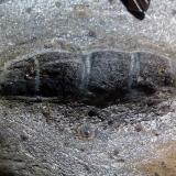 Pseudomorfo de andalucita en micaesquisto grafitoso con quiastolita (metacorneana quiastolítica)Laujar de Andarax, Comarca Alpujarra Almeriense, Almería, Andalucía, EspañaCristal de casi 4 cm. (Autor: prcantos)
