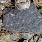 Micaesquisto grafitoso con quiastolita (metacorneana quiastolítica)Laujar de Andarax, Comarca Alpujarra Almeriense, Almería, Andalucía, España (Autor: prcantos)