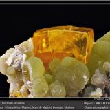 Wulfenite on MimetiteMina Ojuela, Mapimí, Municipio Mapimí, Durango, Méxicofov 11 mm (Author: ploum)