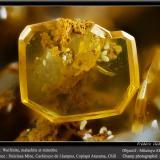 WulfeniteMina Dulcinea de Llampos, Cachiyuyo de Llampos, Provincia Copiapó, Región Atacama, Chilefov 2.2 mm (Author: ploum)