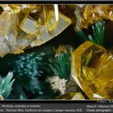 Wulfenite, Mimetite and MalachiteMina Dulcinea de Llampos, Cachiyuyo de Llampos, Provincia Copiapó, Región Atacama, Chilefov 2.2 mm (Author: ploum)