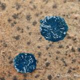 Cornetita<br />Mina L'Etoile du Congo (Mina Estrella del Congo), Lubumbashi (Elizabethville), Cinturón de cobre de Katanga, Katanga (Shaba), Congo RD (Zaire)<br />Encuadre de la fotografia 10 mm.<br /> (Autor: Rafael Galiana)